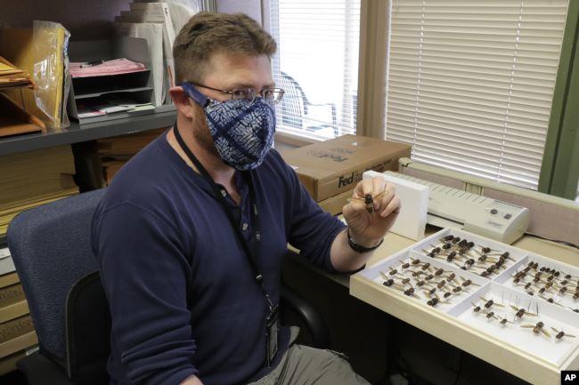Sven Spichiger, um entomologista